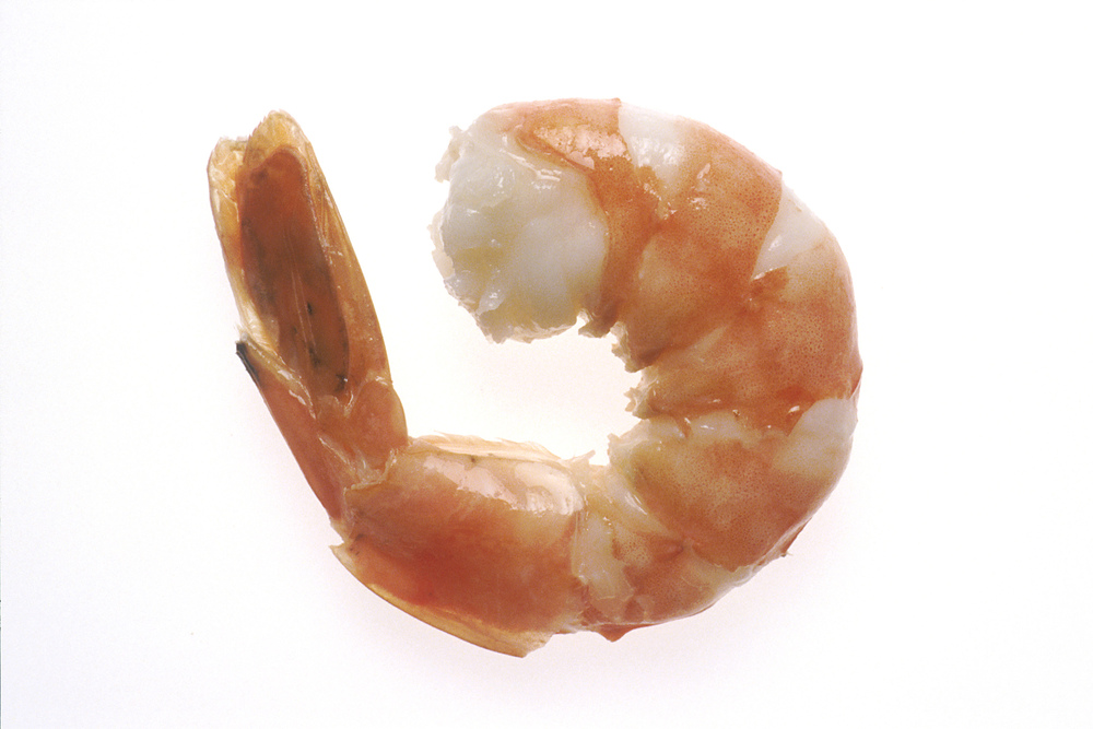 Food/Shrimp.jpg